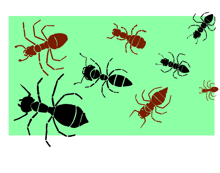 How many legs do ants have?