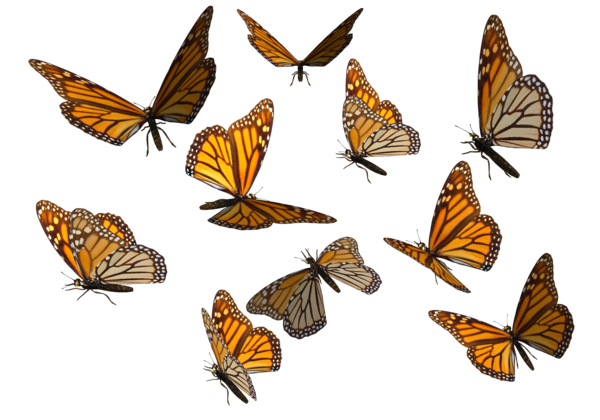 Real Art Design Group : Flying butterflies png clipart best