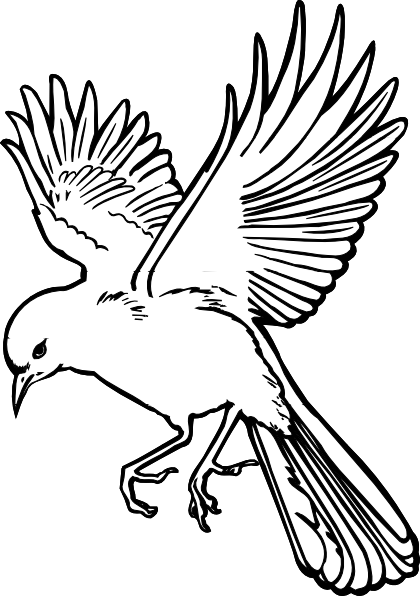 birds drawing outlines . Free cliparts that you can download to you ...