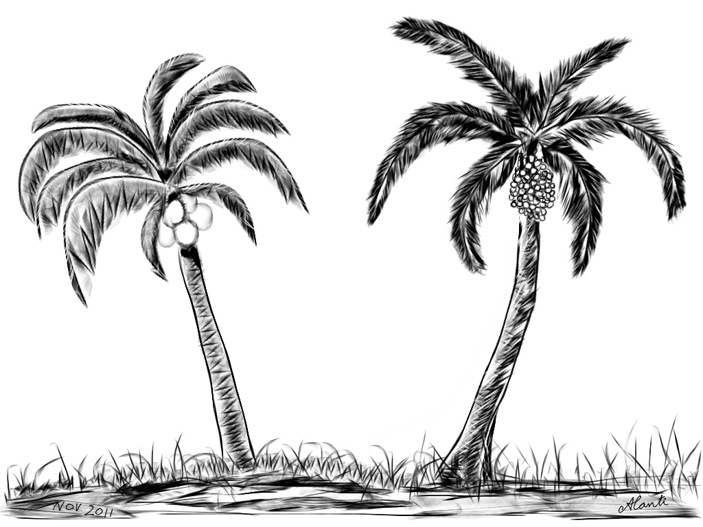 Palm Tree Drawing - ClipArt Best