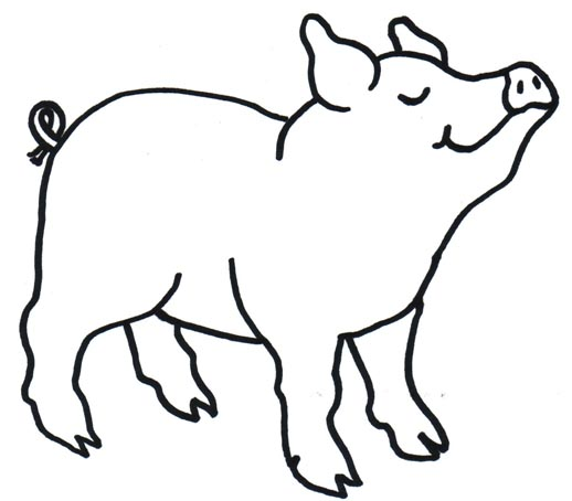Line Drawing Of A Pig Face : Imgs for gt pig face line drawing clipart best