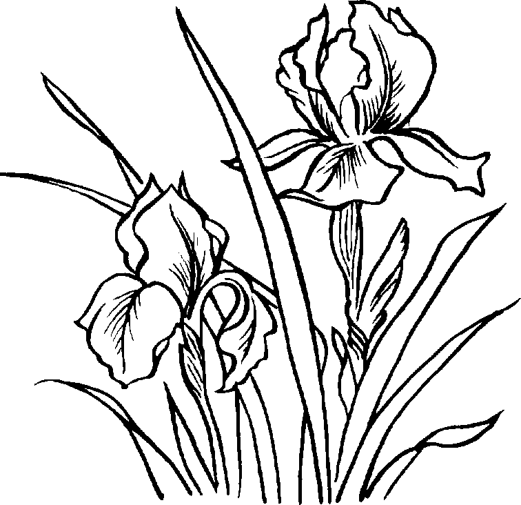 flower plant pictures black and white clipart best