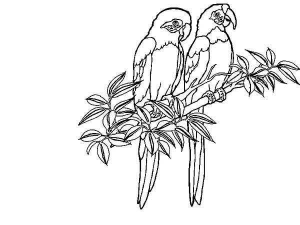 rainforest insects coloring pages ideas - Rainforest Insects Coloring Pages