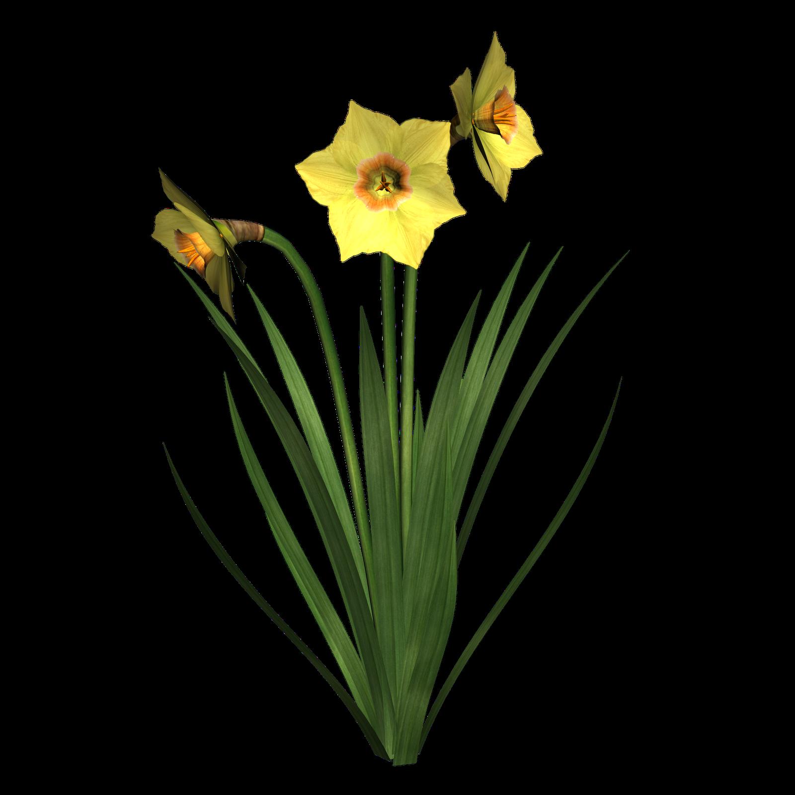Daffodil Clip Art Free - ClipArt Best