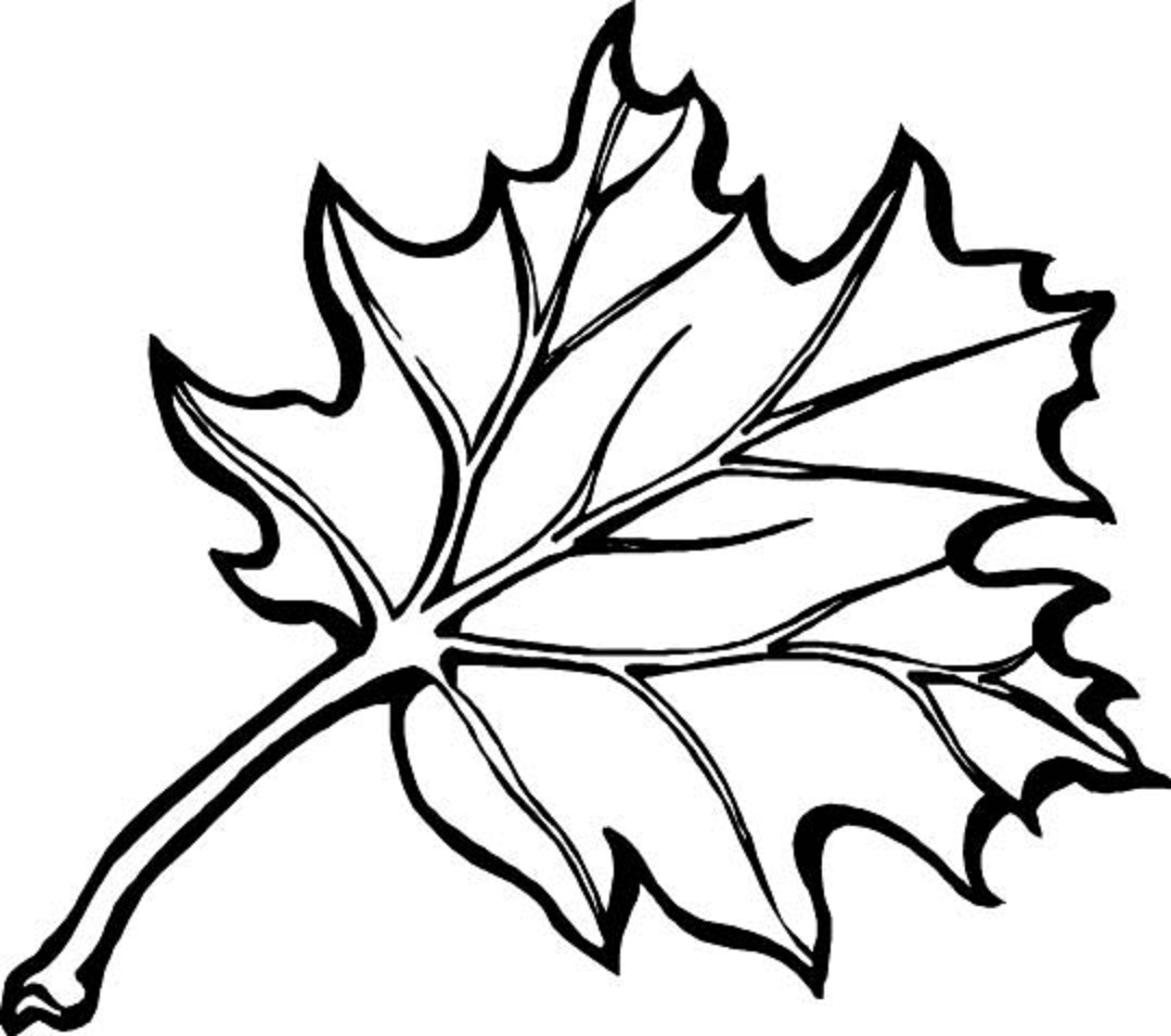 Displaying 16> Images For - Autumn Leaves Drawing...