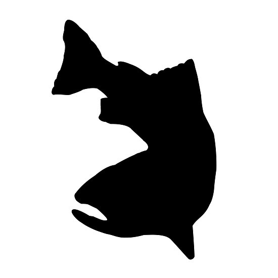 Steelhead silhouette