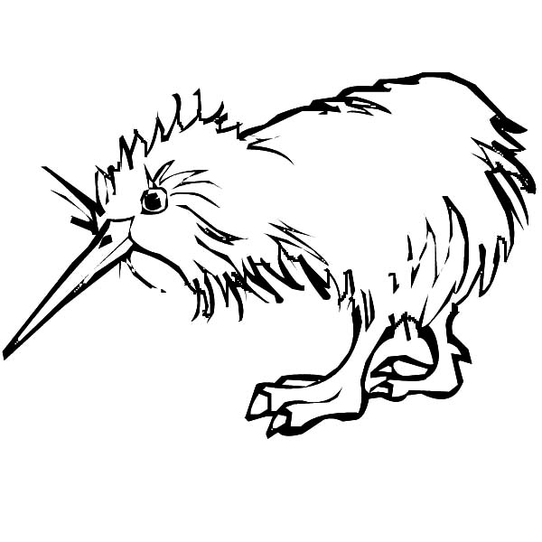Colouring Pictures Of Kiwi Birds : Kiwi bird coloring page clipart best