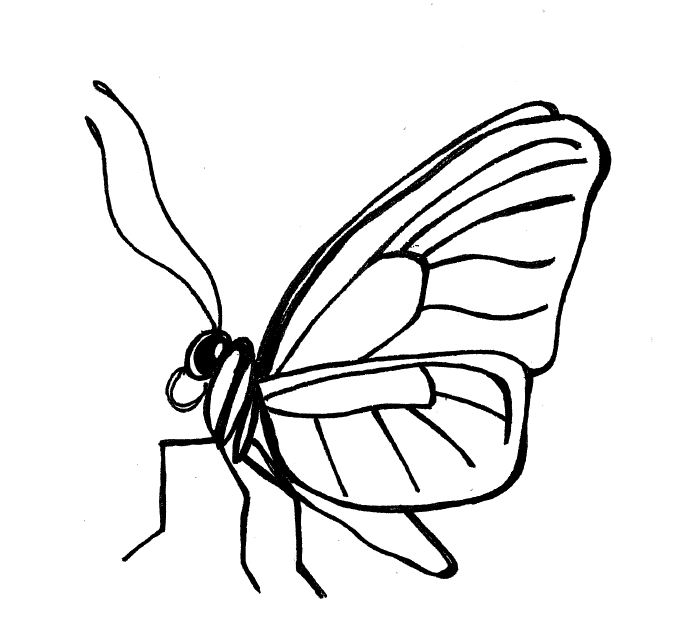 Line Drawing Of Butterfly : Line drawings of butterflies clipart best