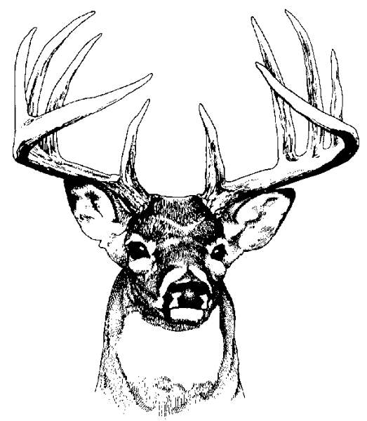 Free Coloring Pages Of Deer Head Picture