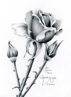 Drawing flowers with pencil clipart best for Cool rose drawings