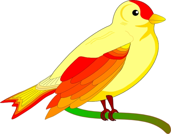 clipart parrot pictures - photo #44