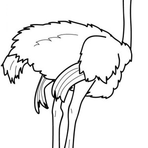 36 Free Ostrich Coloring Pages You Can Print And Color