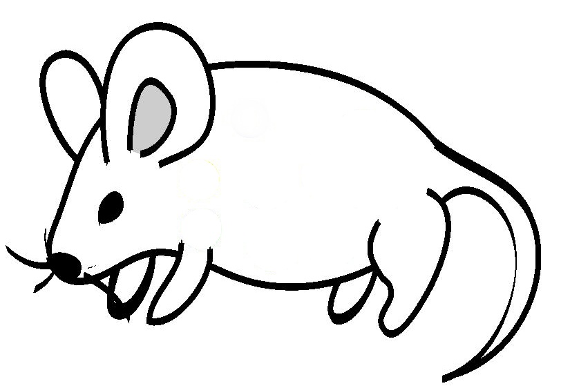 Line Drawings Of Animals Free Download : Animal line drawings clipart best