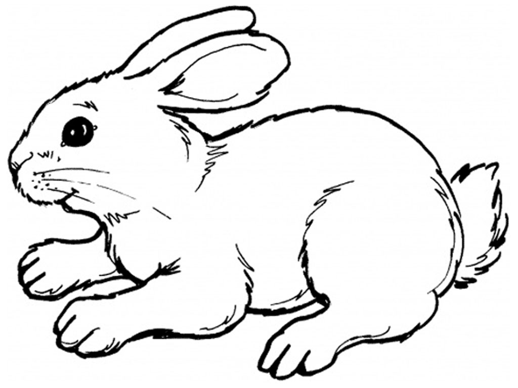 Cartoon Drawings Of Rabbits