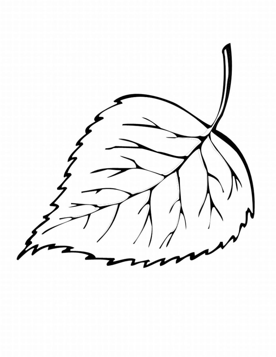 leaf outline template autumn clipart best