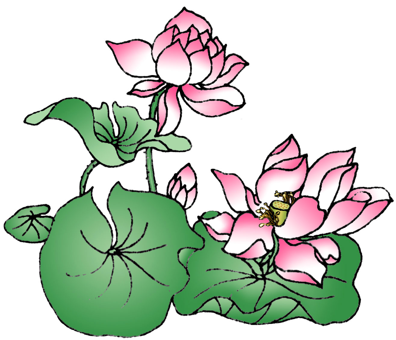 Lotus Flower Drawing ClipArt Best