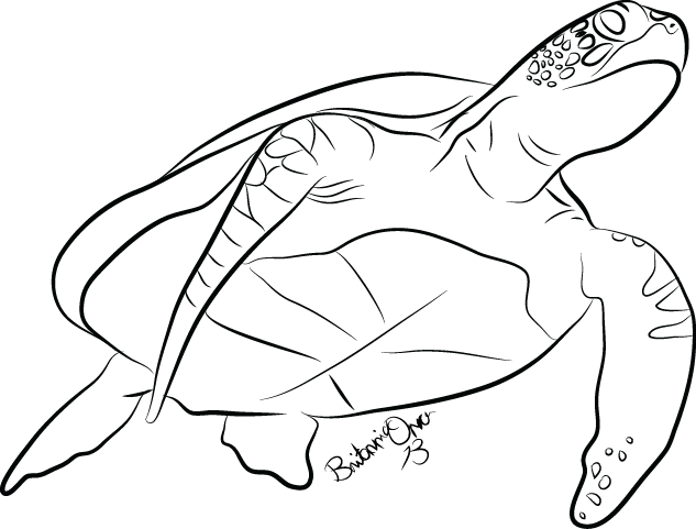 Line Drawing Turtle : Turtle line art clipart best