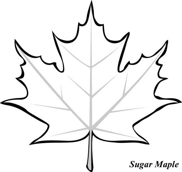 Picture Of Maple Leaf To Color Clipart Best Maple Leaf Coloring