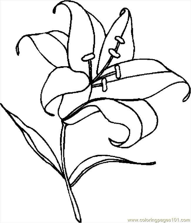 Line Art Lily : Easter lily line drawing clipart best