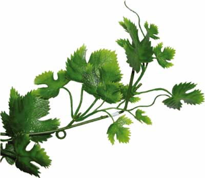 Leaves Vines - ClipArt Best