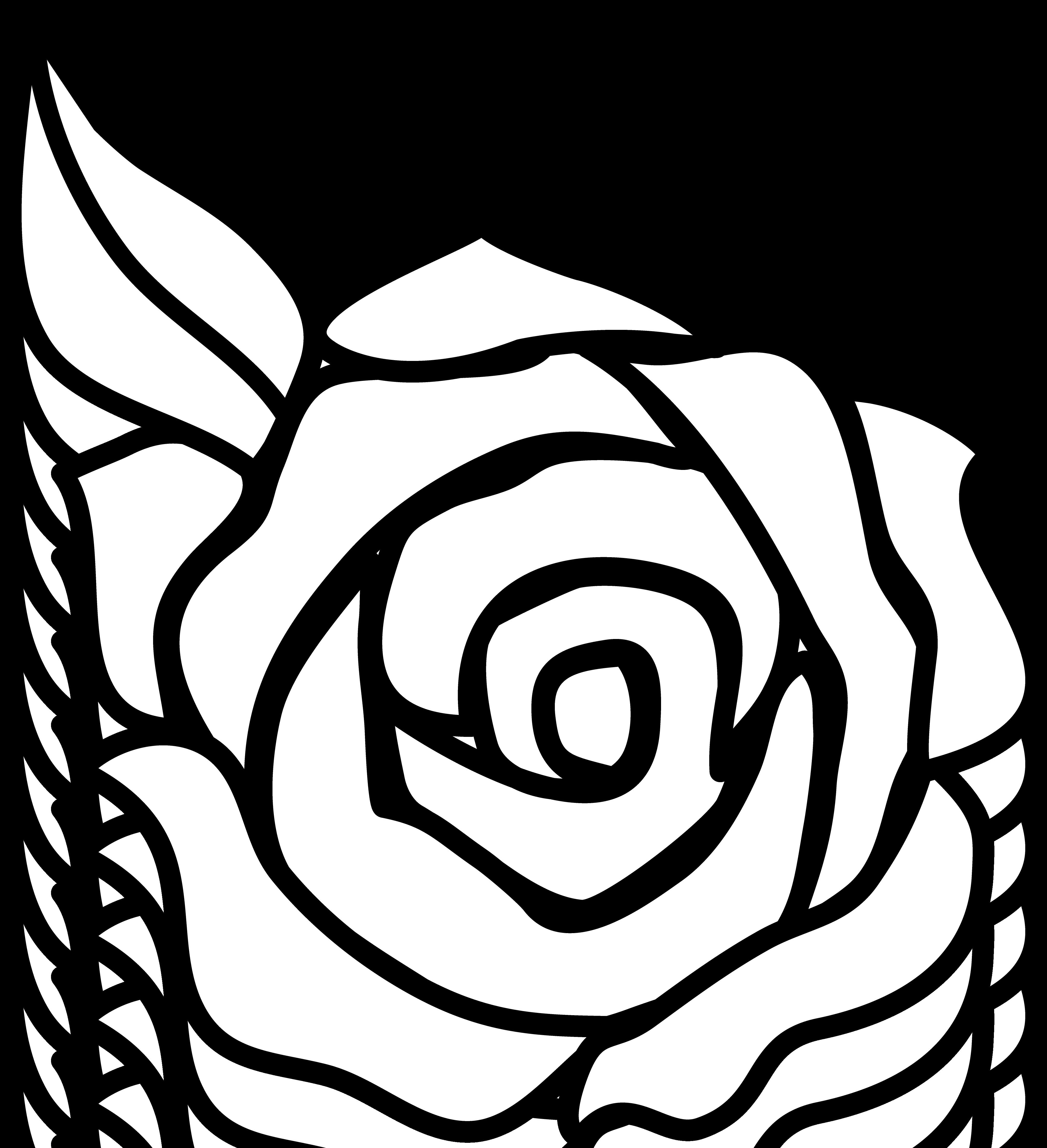 Black Rose Drawing - Delazious  - Clipart Best