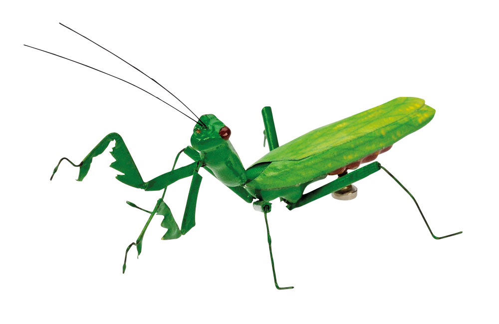 Bug Cricket - ClipArt Best
