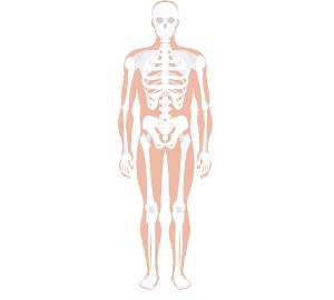 human skeleton diagram without labels clipart best. Black Bedroom Furniture Sets. Home Design Ideas