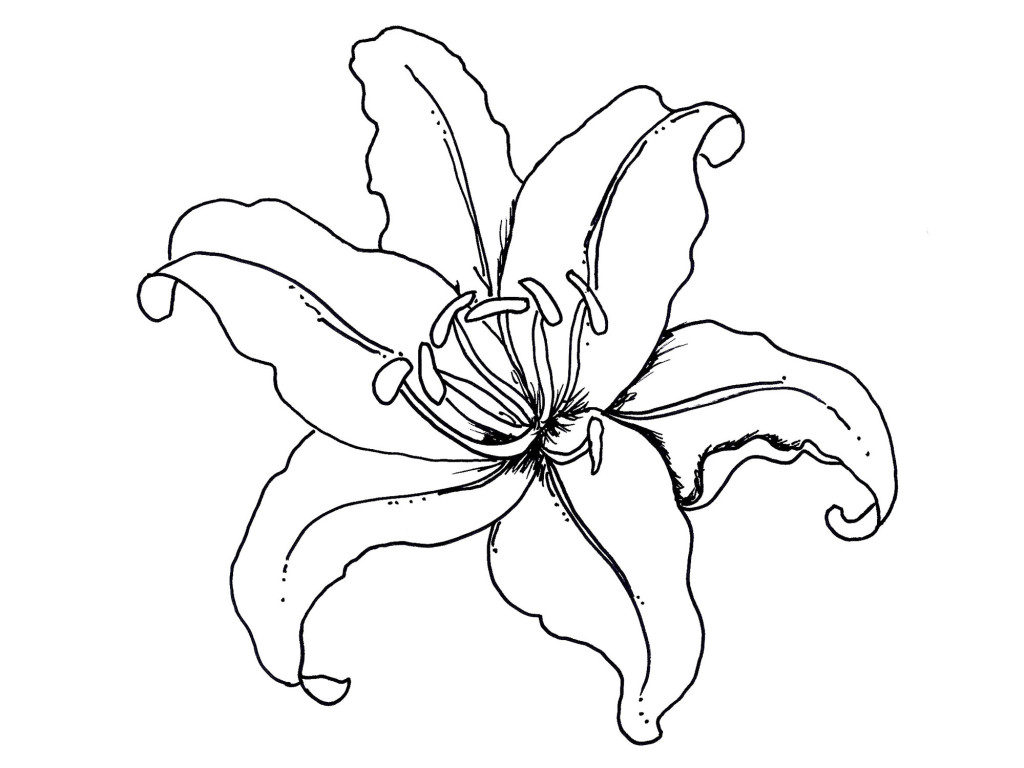 57 coloring pages flowers fruits printable