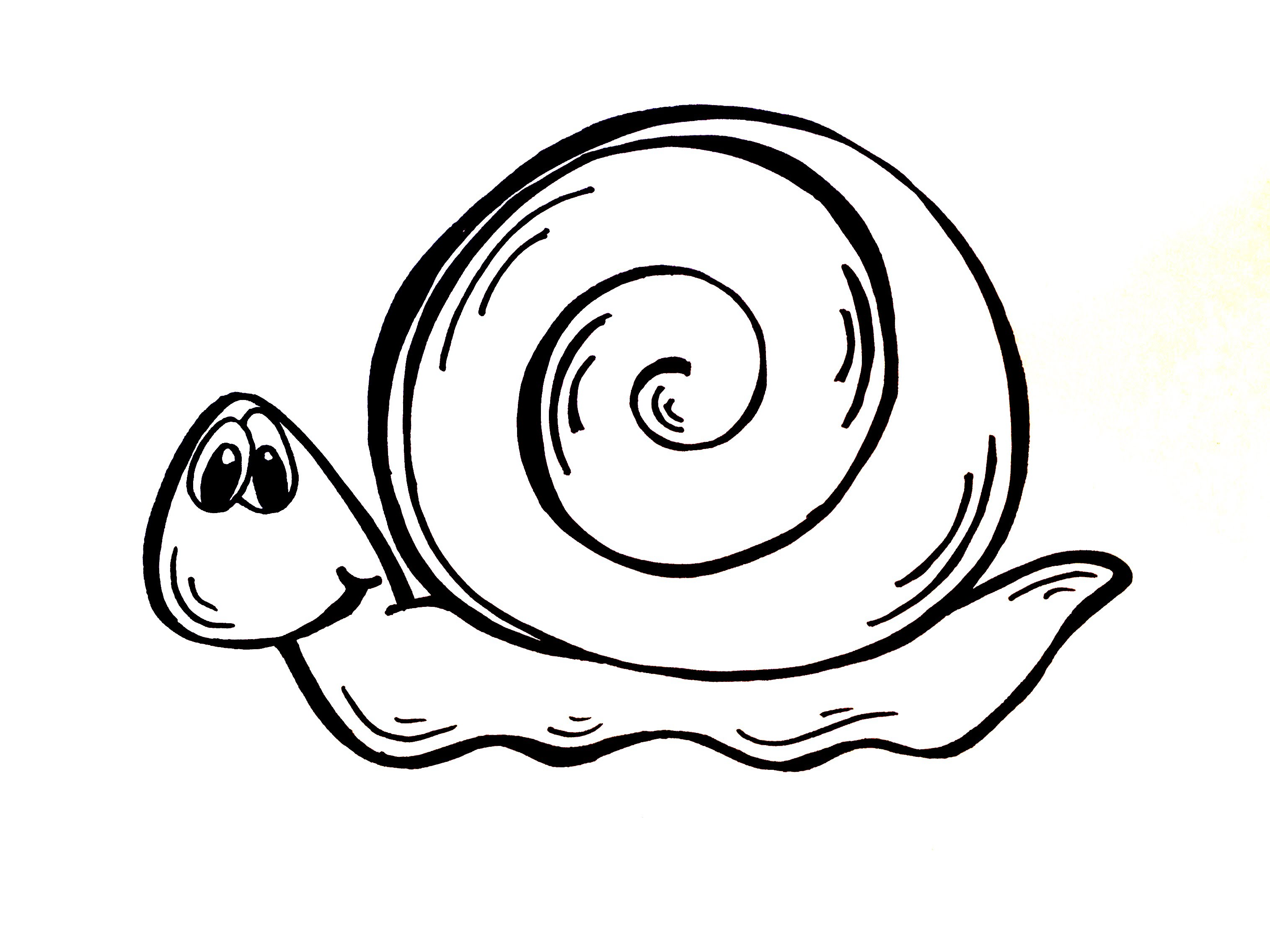 Snail drawing clipart best for How do you draw a snail