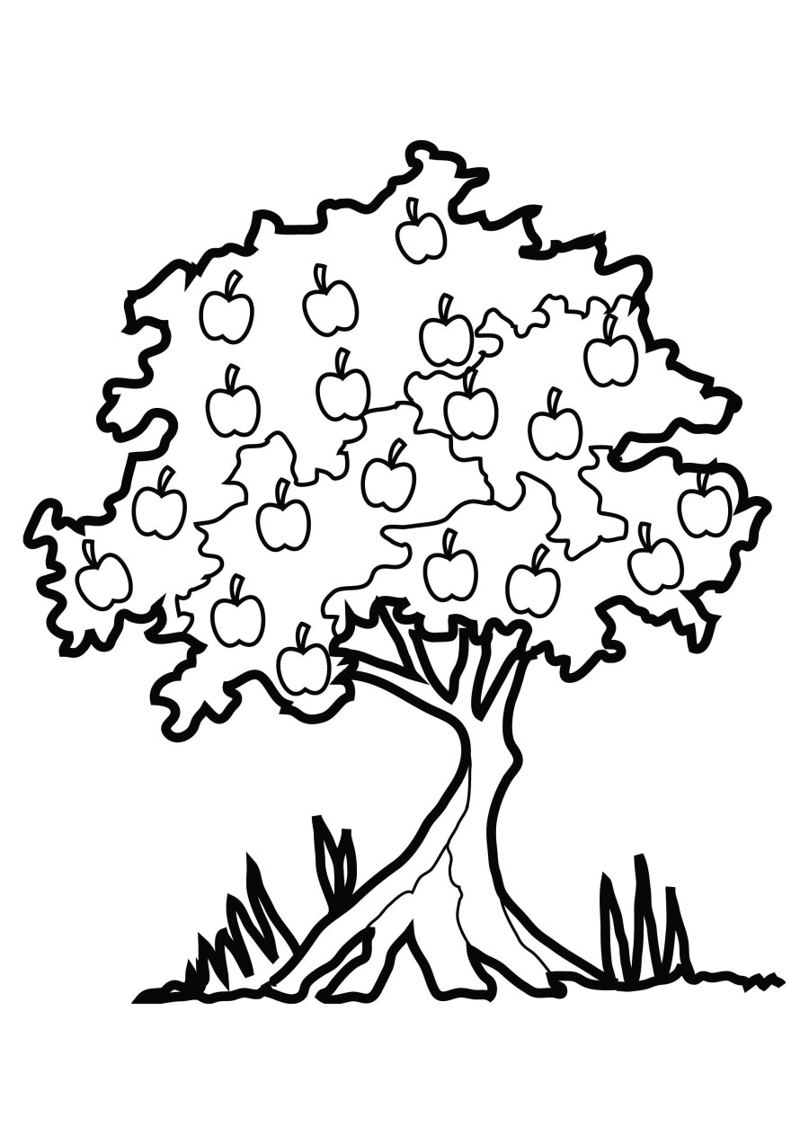 Mango Tree Colouring Pages ClipArt