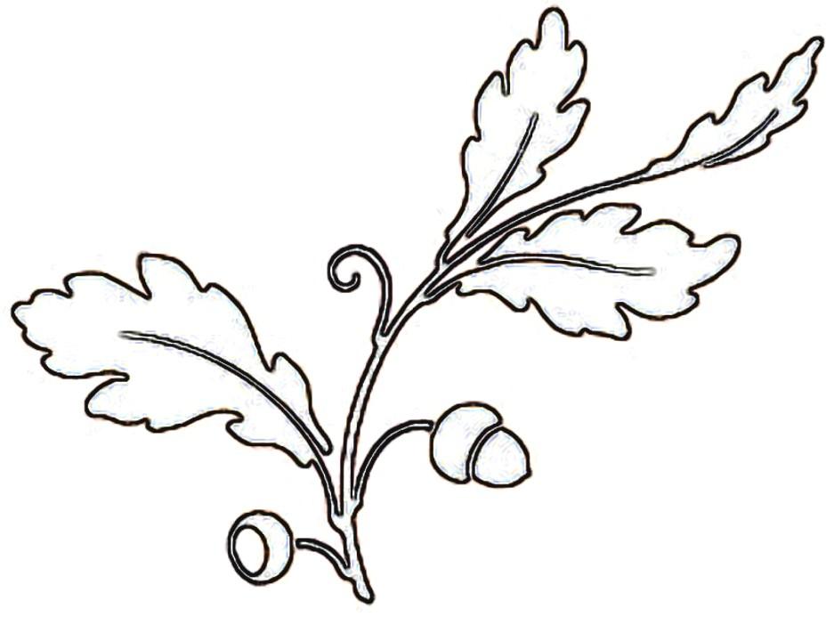 Line Art Leaf : Oak leaf line art clipart best