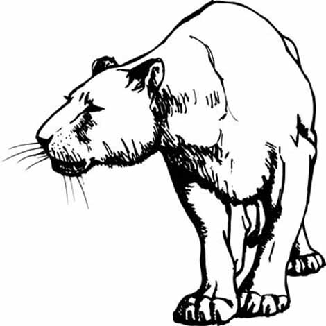 Coloring Pages Animals Realistic Lion : Lion Coloring Page ClipArt Best