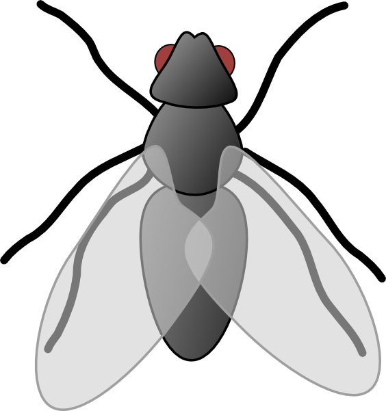 fruit fly clipart - photo #10