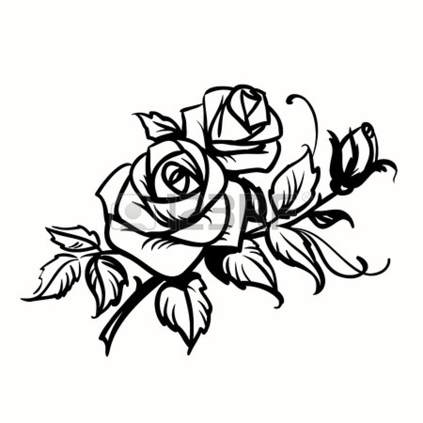 Rose Outlines