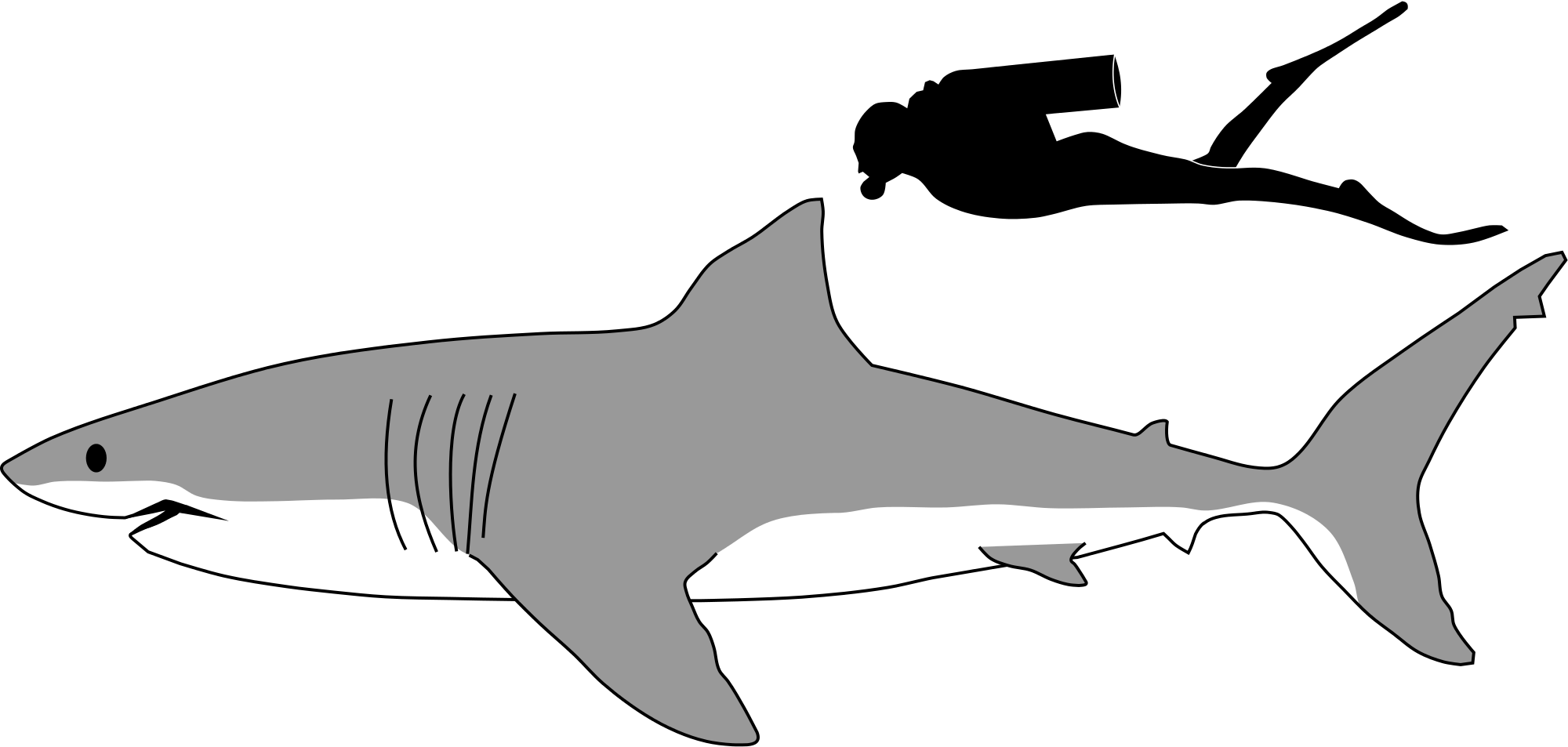 Tiger Shark Outline - ClipArt Best