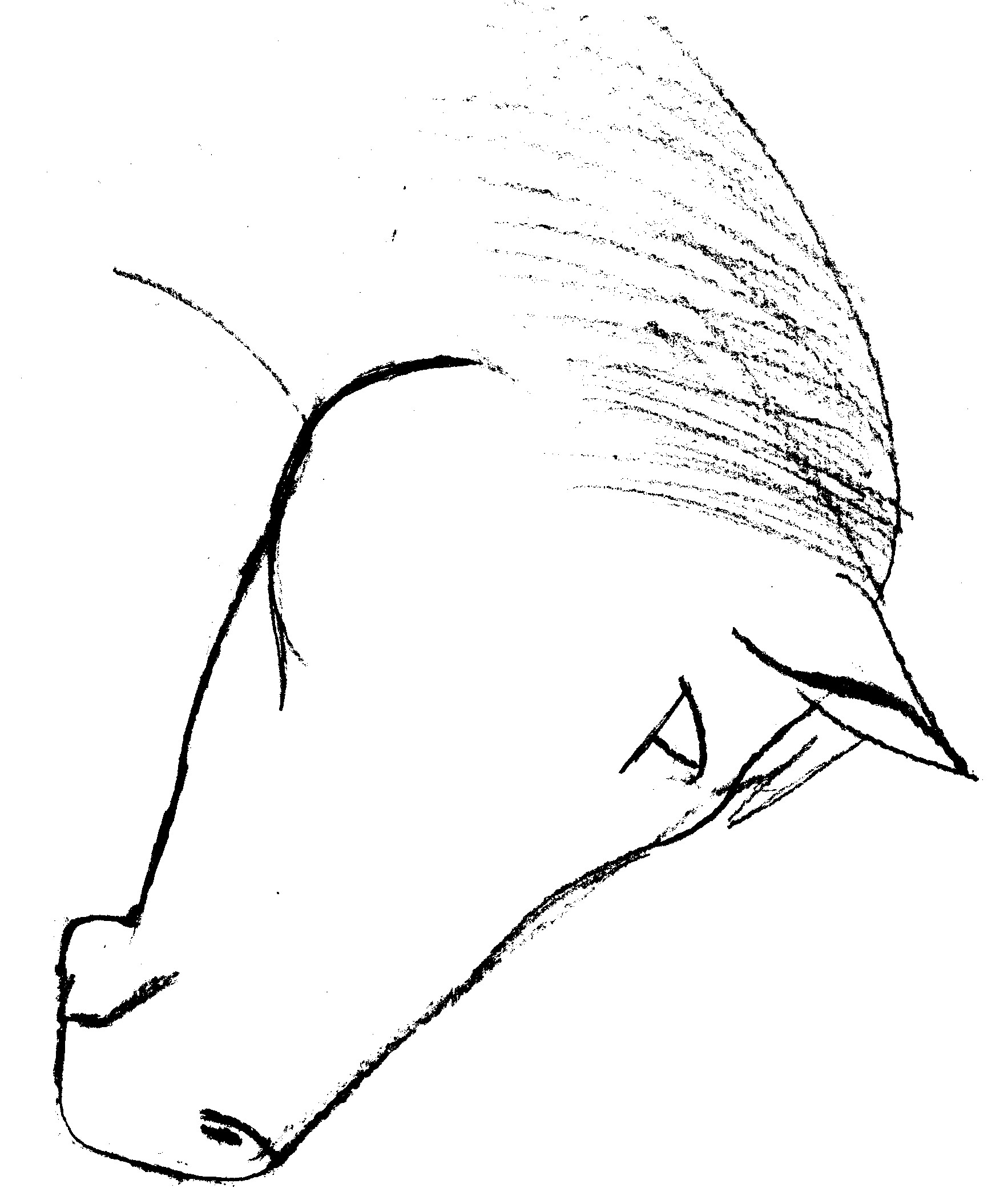 Line Drawing Horse Head : Horse head drawing delazious clipart best