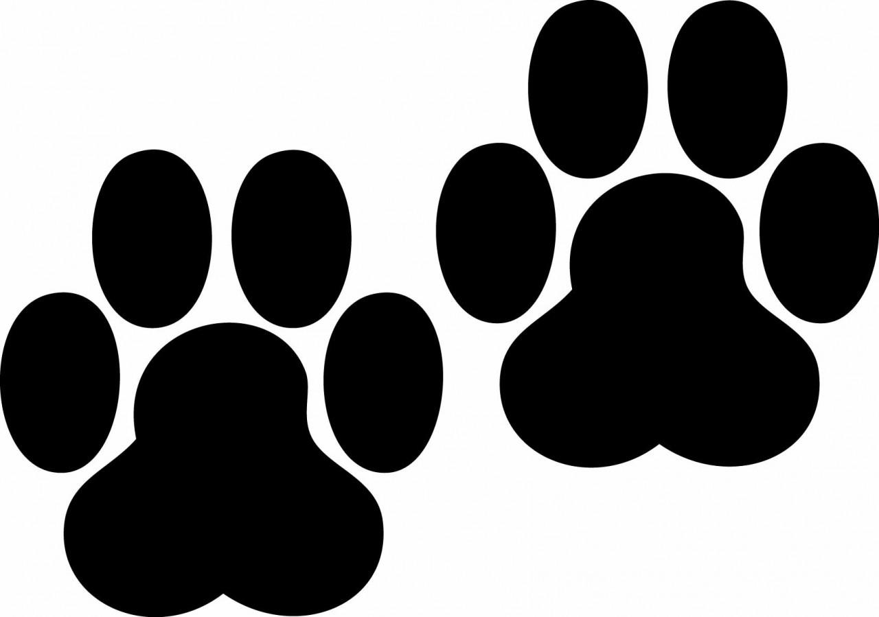 Tiger Paw Prints Border Paw prints chalkboard -